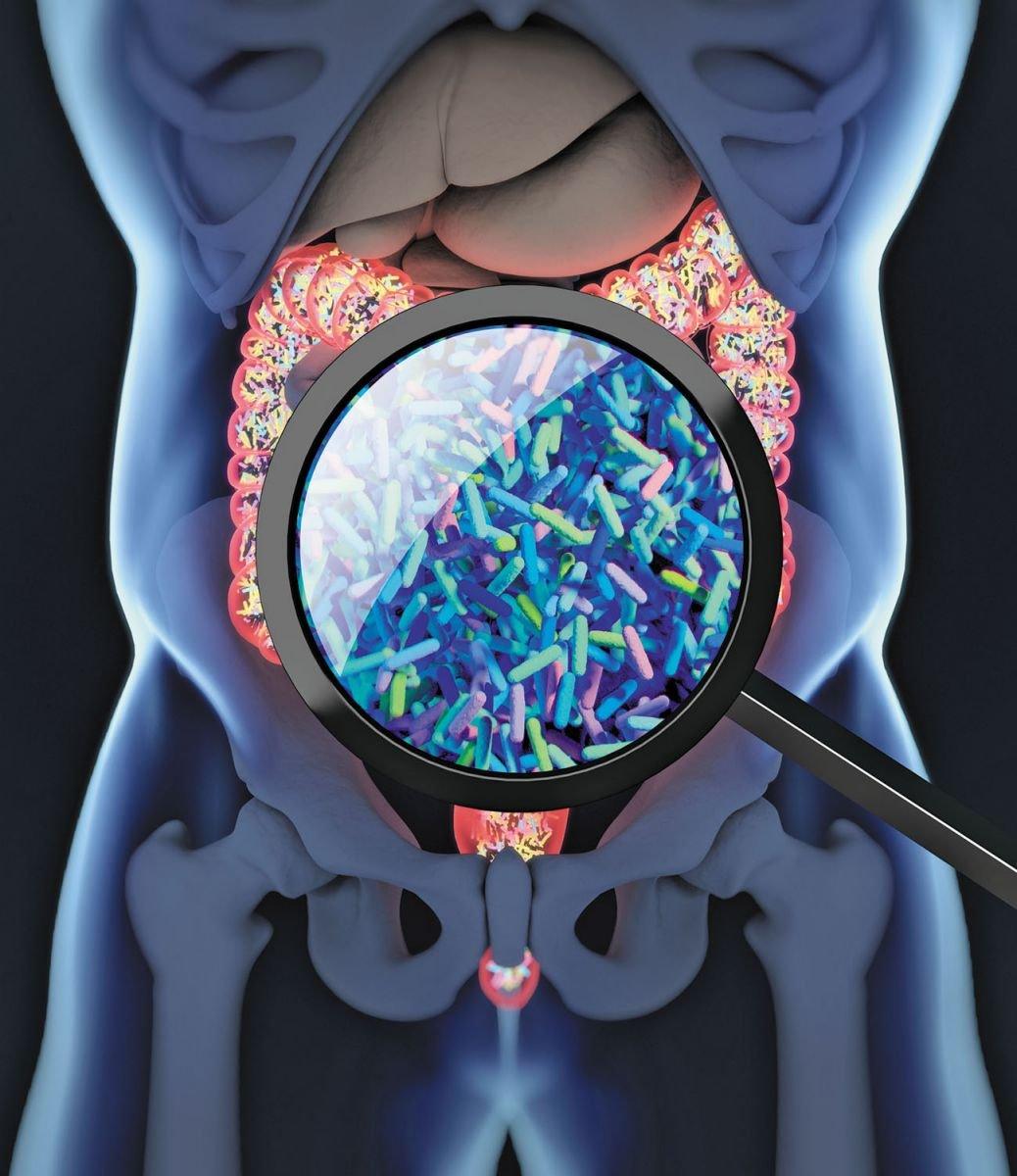 gut biology