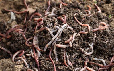 Making soil work