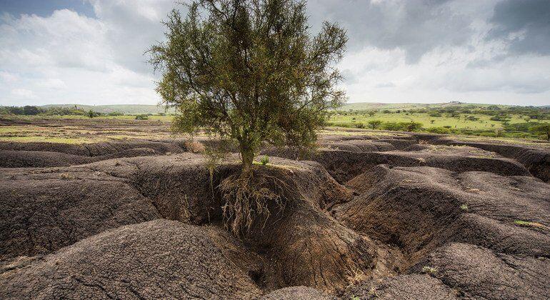 soil degratation