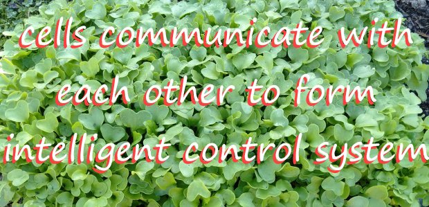 cells communicate